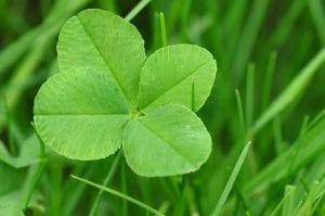 a green clover