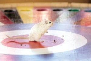 a mouse standing in the centre of wheel with holes